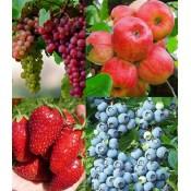 Плодово - ягодные растения